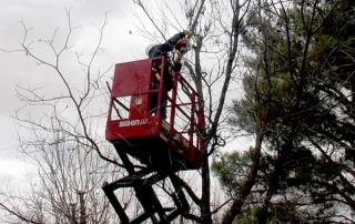 2230s Model Skid Lift for Tree Work