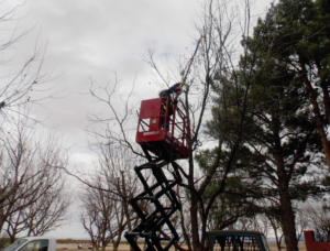 2230S Trimming Pecan Trees